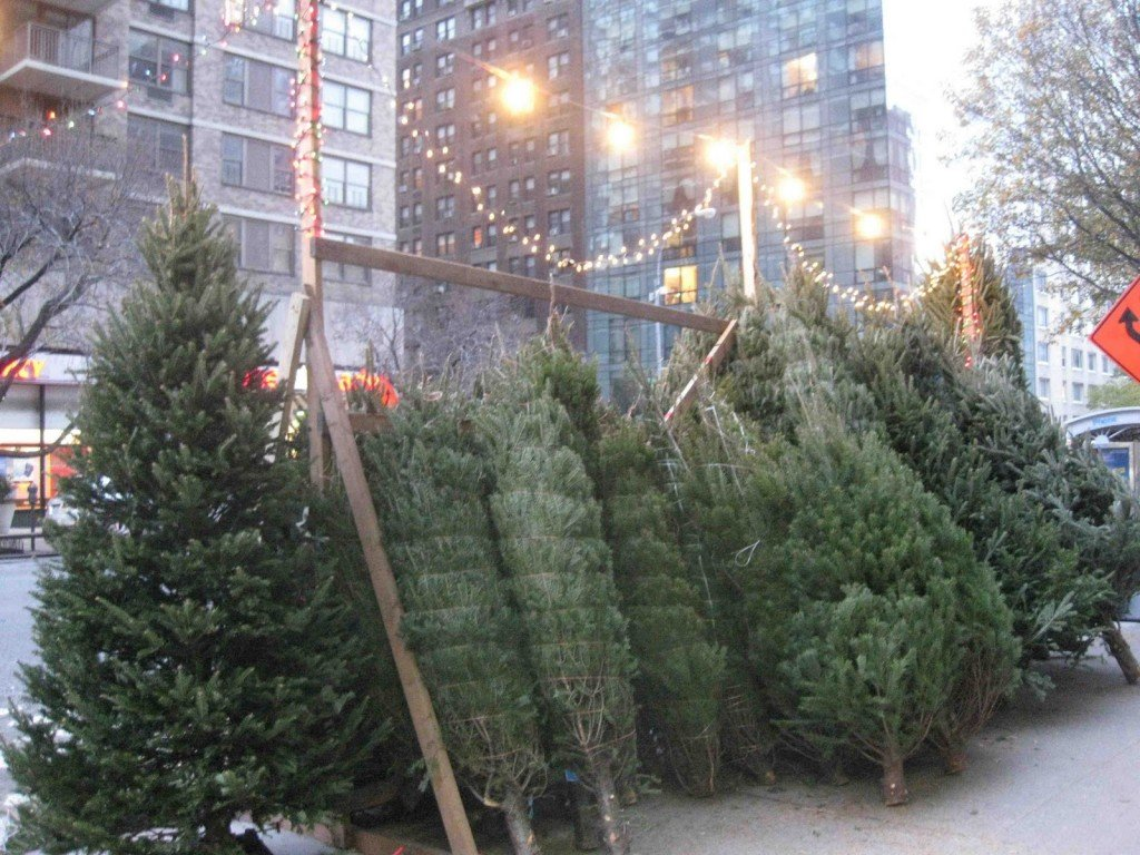 brooklyn heights trees can be bought at two tree stands nearon montague street the first is in front of st anns church on clinton street between - Where To Buy Christmas Tree